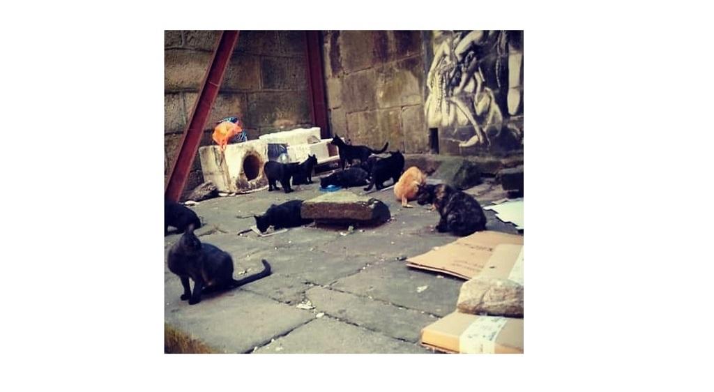 colonia gatos Teatro Principal